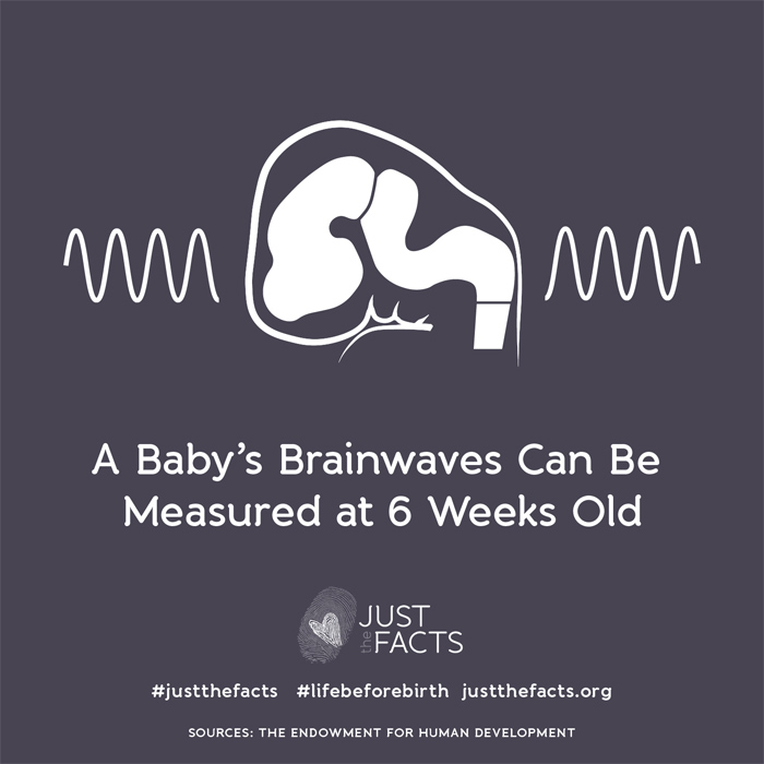 A babys' brainwaves can be measured at 6 weeks old